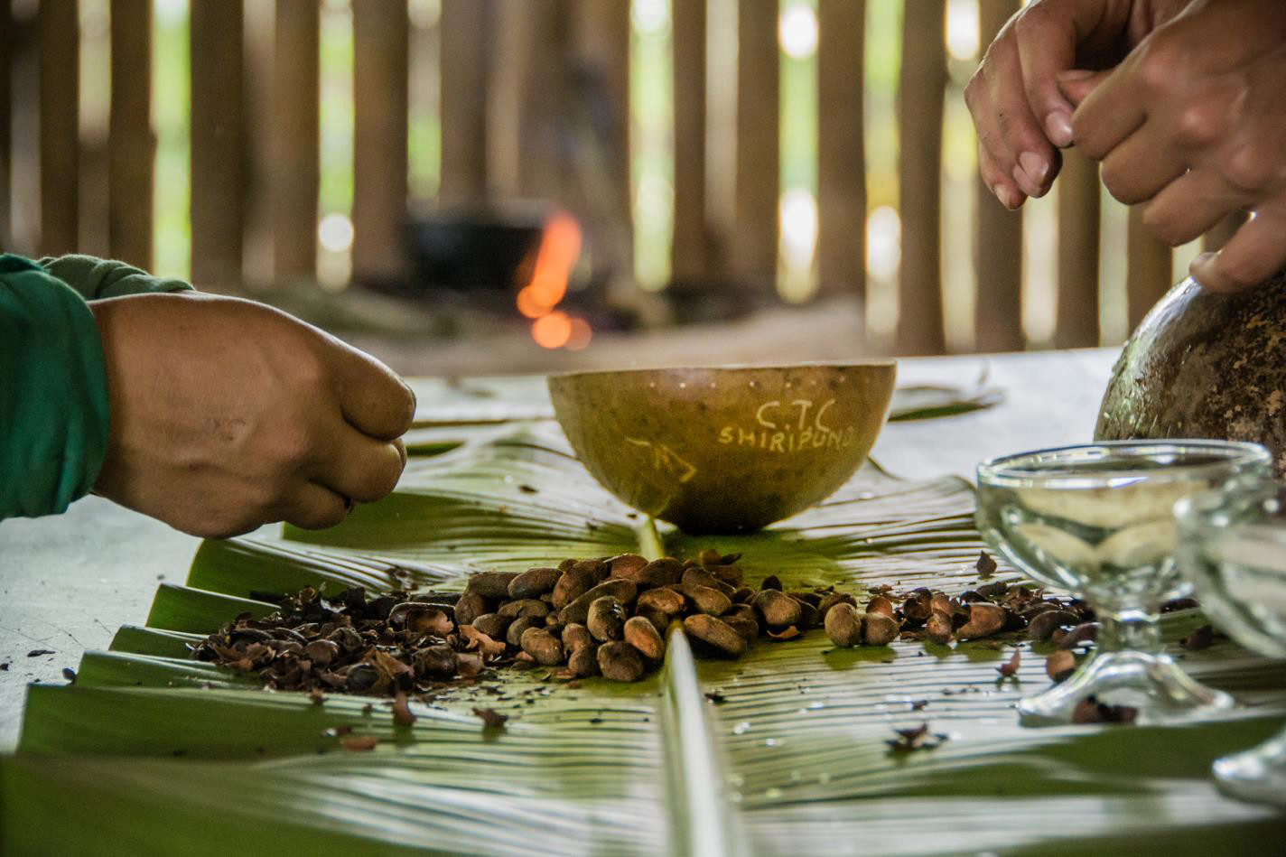 Pelado de granos de cacao-Juliana Carolina Bertone-Argentina